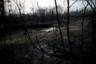 Коровья туша на дороге в джунглях Амазонии, зачищаемых лесорубами и фермерами после лесных пожаров. Снимок сделан 24 августа в окрестностях бразильского города Порту-Велью. В 2019-м году пожары уничтожили более 1,8 миллиона гектаров амазонских лесов на территории крупнейшей латиноамериканской страны. К лету число возгораний увеличилось на 84 процента по сравнению с прошлым годом. Экологи беспокоятся о судьбе джунглей, так как благодаря их огромной площади и плотности они производят заметную долю кислорода в атмосфере Земли. Этот район по праву называют легкими планеты.