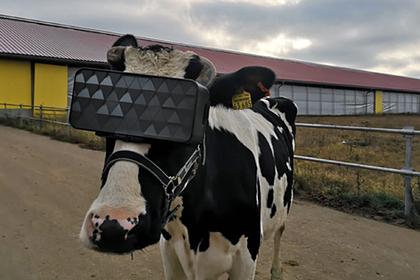 Участники британского телешоу посмеялись над российскими коровами