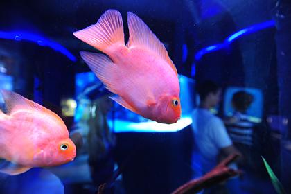 В России построят самый большой аквариум