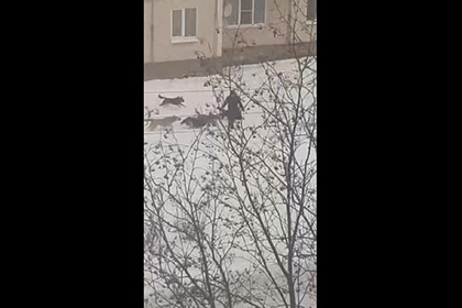 Свора собак атаковала россиян и попала на видео