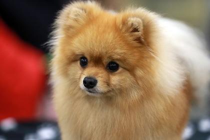 Названы любимые породы собак россиян
