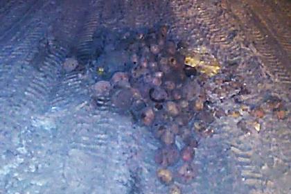 В российском городе дорожные ямы заделали картошкой