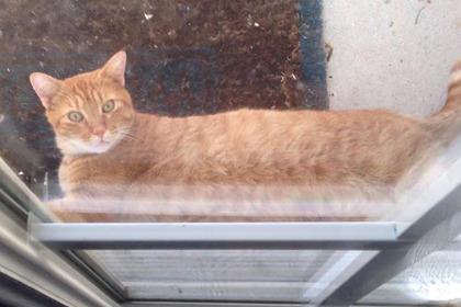 Вежливый кот обрел популярность в сети