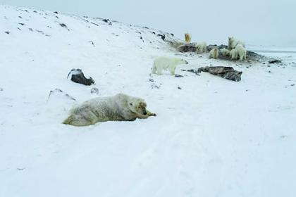 В оккупированное медведями российское село доставят шумовые патроны