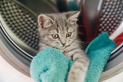 Котенок 20 минут провел в работающей стиральной машине и выжил