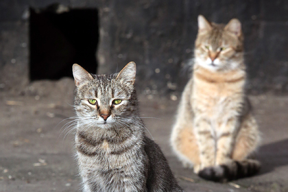 Британский журналист рассказал о спасителе российских котов