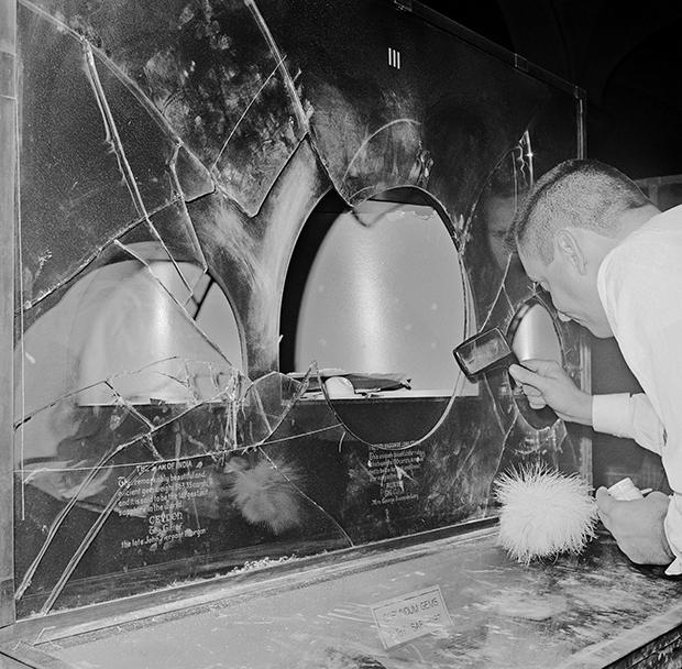 Разбитая витрина Американского музея естественной истории