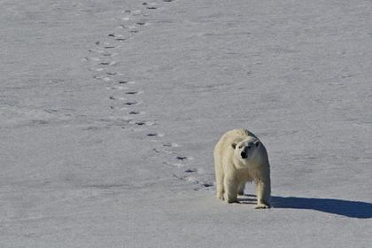 Медведи начали покидать оккупированное российское село
