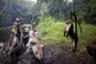 Труп краснохвостой обезьяны подвешен за хвост, чтобы муравьи не добрались до него. Она стала жертвой браконьеров недалеко от города Мбандака в Демократической Республике Конго. Ее детеныш проплакал всю ночь, пока его не нашли и не съели. Фотограф хотел показать грубую реальность охоты: как выпотрошенный символ богатого биоразнообразия становится образом опустошения лесов.