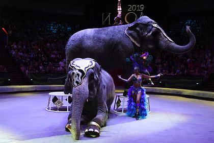 Мединский высказался о запрете выступлений животных в цирке