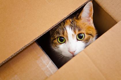 Кот забрался в посылку и восемь дней прожил в ящике без воды и пищи