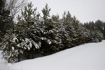 Метеоролог объяснил скачки температуры в России