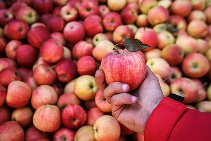 В России взлетели цены на яблоки