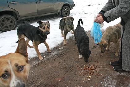 В России нашли обглоданный собаками труп ребенка