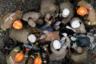 Пожарные пытаются реанимировать машиниста пригородного поезда, пострадавшего при столкновении с другим поездом на станции Сан-Кристован в Рио-де-Жанейро. Несмотря на все усилия, спасти его не удалось.