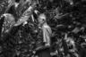 В центре Рио-Де-Жанейро есть старый дом с садом, за которым ежедневно ухаживает 90-летний старик. После того как девять лет назад умерла его жена, сад стал для него делом всей жизни и настоящей страстью. Он полностью отдается его красоте, сочиняя баллады, вмещающие в себя и восхищение природой, и тоску по ушедшей спутнице.