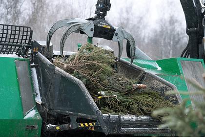 Власти Подмосковья анонсировали новогоднюю экоакцию