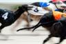 Собачьи бега — традиционное развлечение в Великобритании. На фото — эпизод февральского забега на стадионе в Брайтоне.