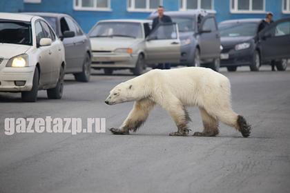 Журнал TIME внес фото с гуляющей по Норильску медведицей в сотню снимков года