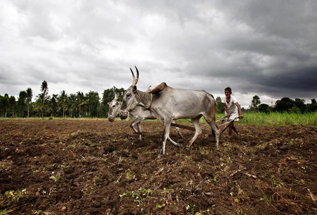 Индийский фермер