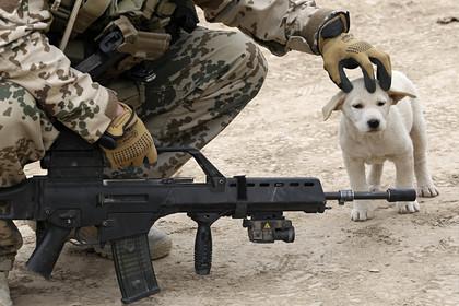 Военнослужащий бундесвера и собака в Афганистане