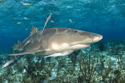 Лимонная акула напала на семилетнюю девочку