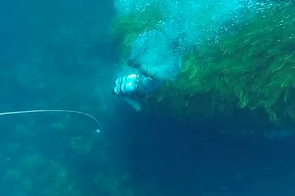 Вместо съеденного акулами-людоедами серфера нашли съеденного ими дайвера