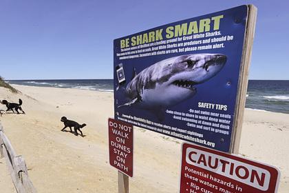 В Австралии акулы съели футболиста