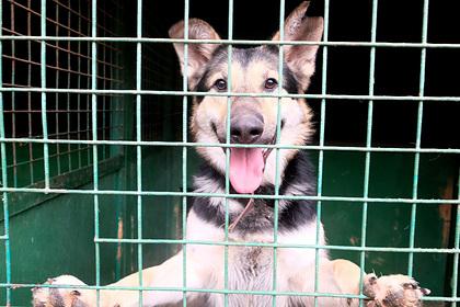 На Ямале появился первый приют для животных