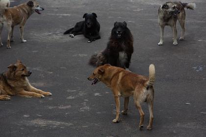 В российском городе нашли изъеденное собаками тело сторожа