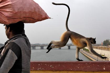 Полчища обезьян выселили обитателей деревни из их домов