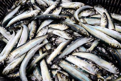Коренные малочисленные народы Ямала смогут ловить больше рыбы