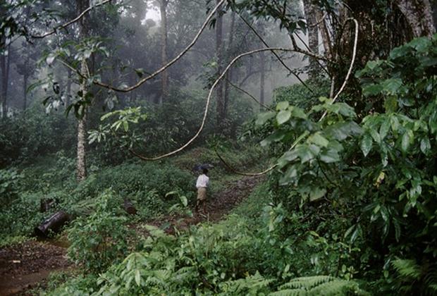 Индийский лес