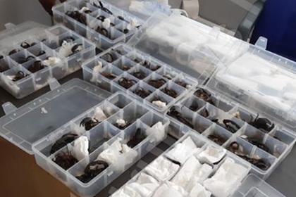 Пассажир попытался вывезти две сотни живых скорпионов самолетом и попался