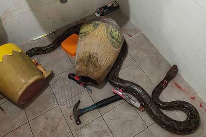Женщина пошла в туалет и вступила в смертоносную схватку со змеей