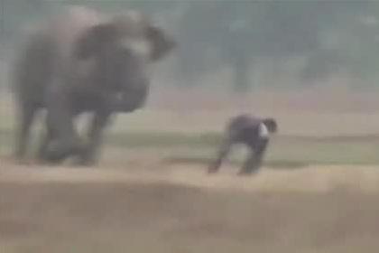 Погоня разъяренного слона за отдыхающими попала на видео