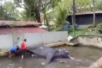 Заподозренного в убийстве человека слона загнали в воду и отшлепали палкой