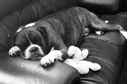 Оставленный на жаре пес погиб в муках во время авиаперелета