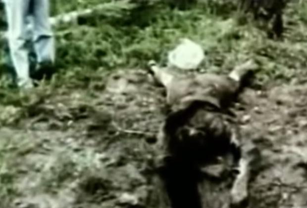 Тело одной из жертв Александра Пичушкина