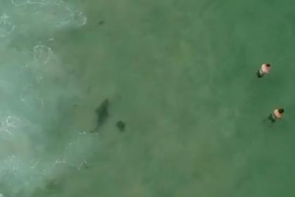 Подросток снял на видео купающихся и спас их от акулы-людоеда