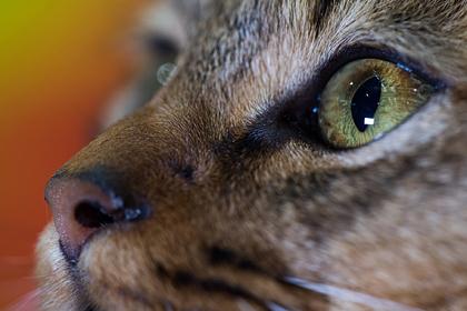 Ласковый кот стал причиной вражды двух соседок