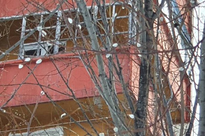 Январская оттепель в Сибири пробудила деревья