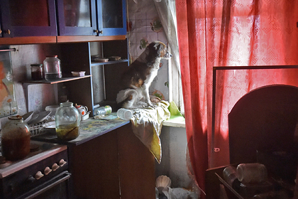 Россиянка завела в квартире двадцать собак и запугала соседей
