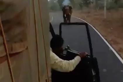 Разъяренный слон погнался за грузовиком и оторвал капот