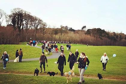 На последнюю прогулку с умирающим псом пришли сотни человек