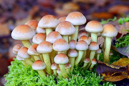 Предсказано появление городов из гигантских живых грибов