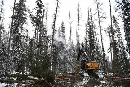 Россия потеряла миллиарды рублей на вырубке лесов