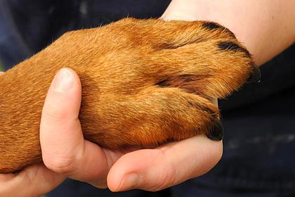 Собака погибла после укуса пьяного мужчины