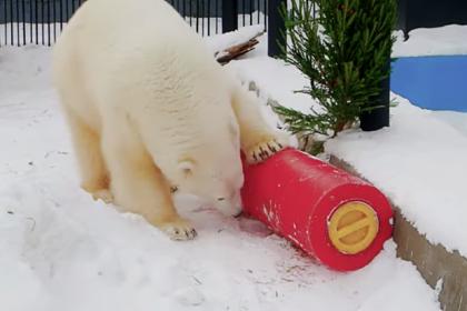 Спасенной в Норильске медведице подарили «кубик рубика»