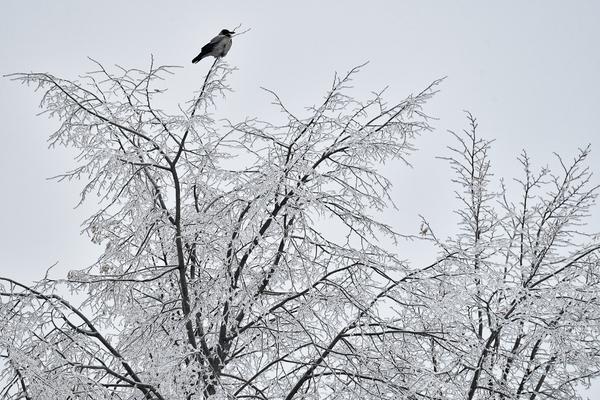 Россиянам пообещали «похожий на зиму» февраль